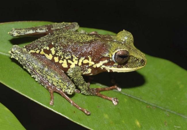 nuevas-especiesa-1040vm1007