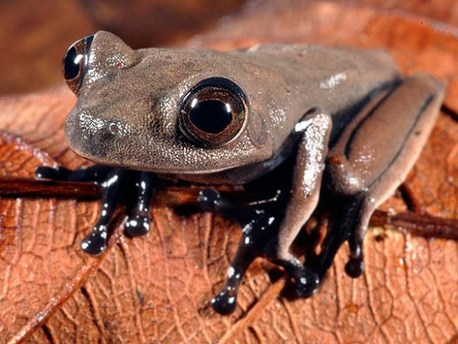 surinam-especie-031013-g