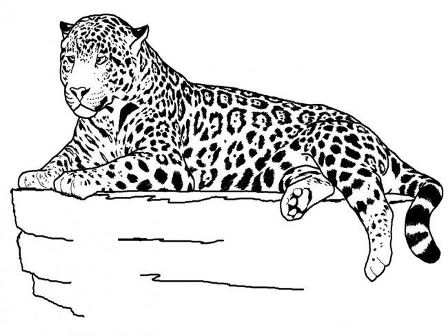 tigre-para-pintar