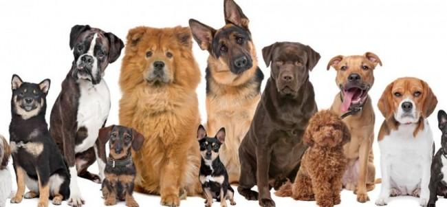 zapa864_razas-de-perros-mas-grandes-y-mas-pequenas_1508