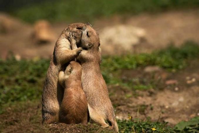 Amor-y-animales-Foto-18