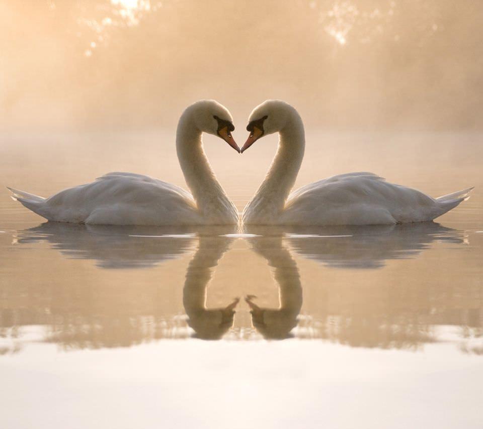 Amor-y-relaciones-de-pareja-entre-animales-4