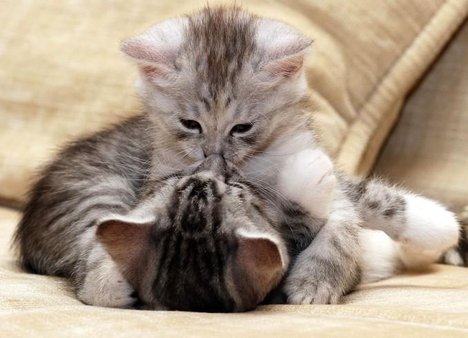 Amor-y-relaciones-de-pareja-entre-animales-7