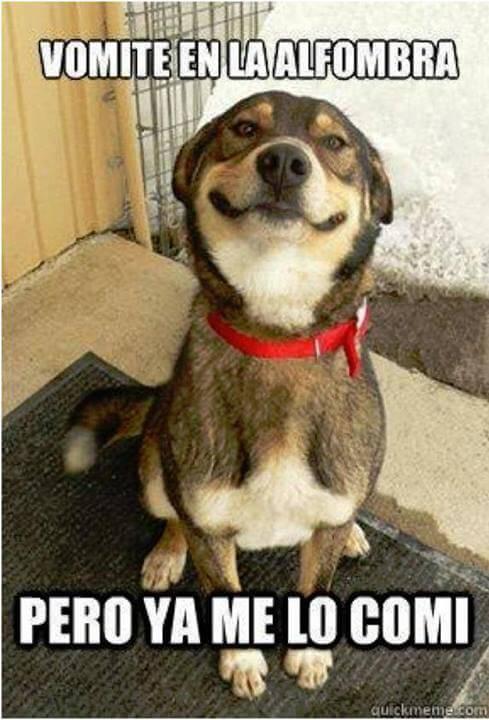 Recopilación-de-memes-chistosos-de-perros-5