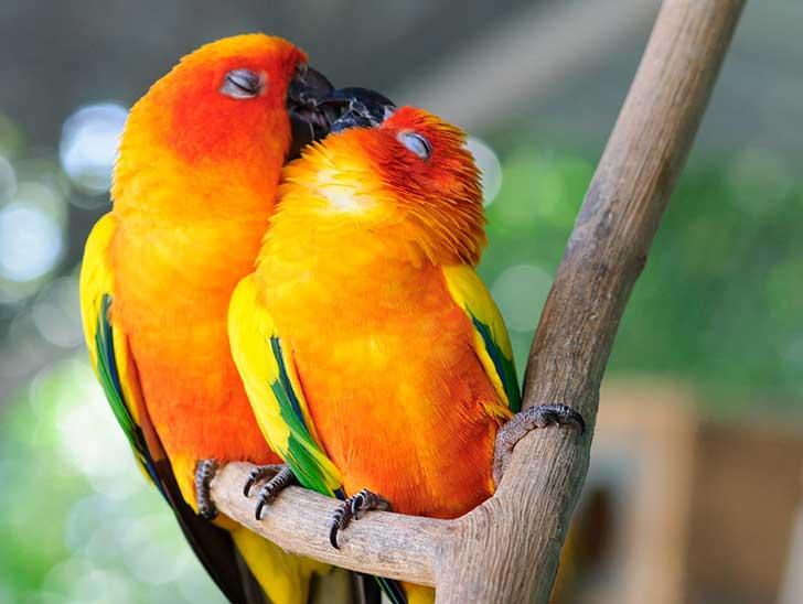 animal-love-friendship-110__880