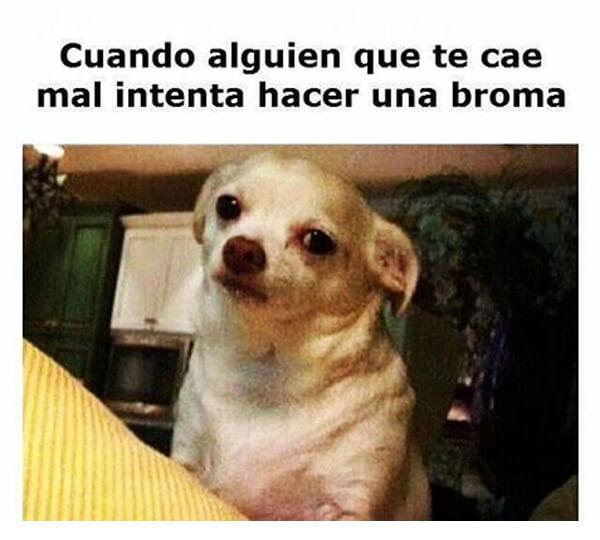 cara-de-what-por-mala-broma-perro