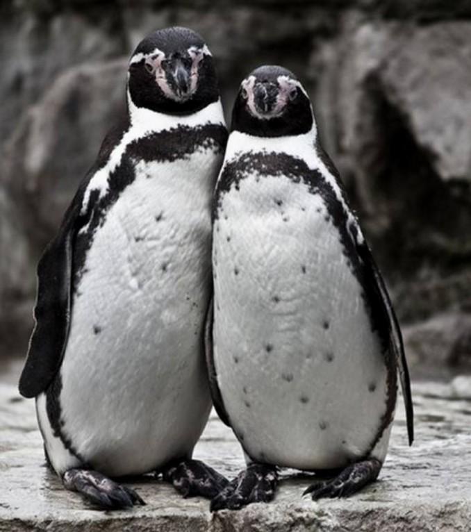 el-amor-en-pareja-ilustrado-por-los-animales-cuando-os-vestis-de-la-misma-forma-sin-haberlo-planeado_6881_wide