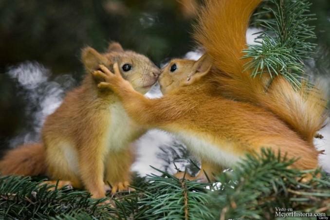 fotografias-tiernas-de-amor-entre-animales-1
