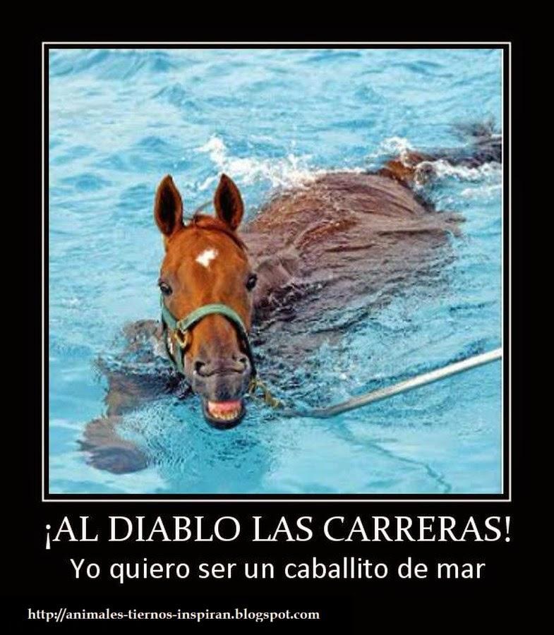 graciosas-animales-al-diablo-las-carreras