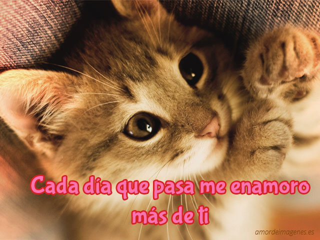 Imagenes De Gatitos Tiernos Para Descargar Gratis: Tiernas Imágenes De Buenos Días Con Hermosos Animalitos