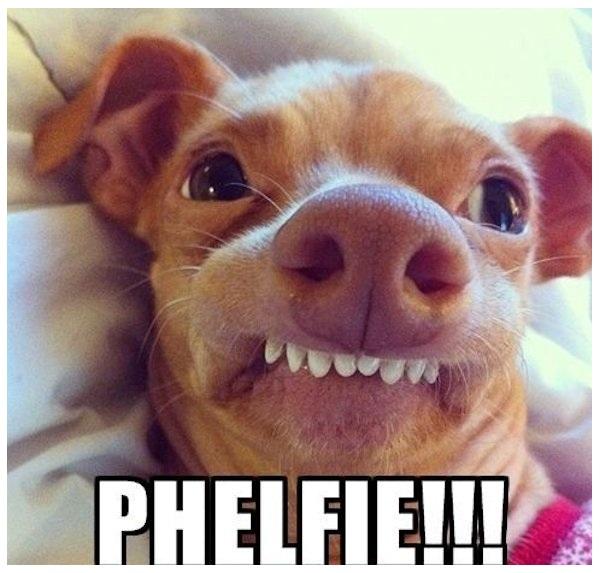 imagenes-de-selfie-de-perros-para-Facebook1