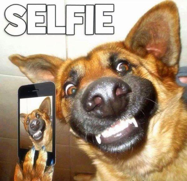 Imágenes de risa con animales: Chistes de mascotas para