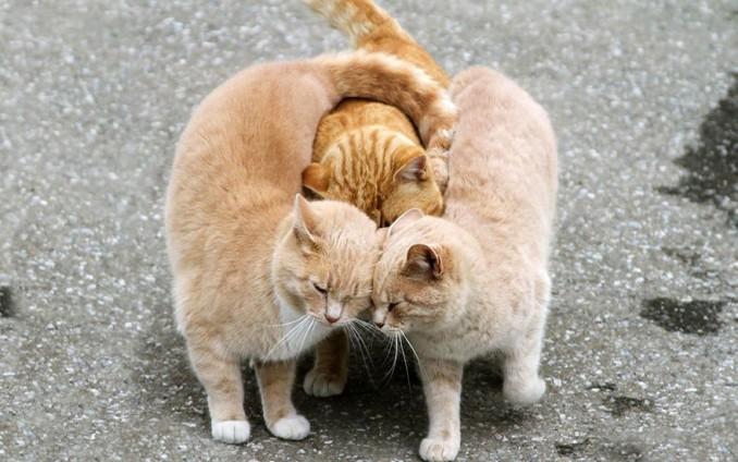 parejas-animales-enamorados-12