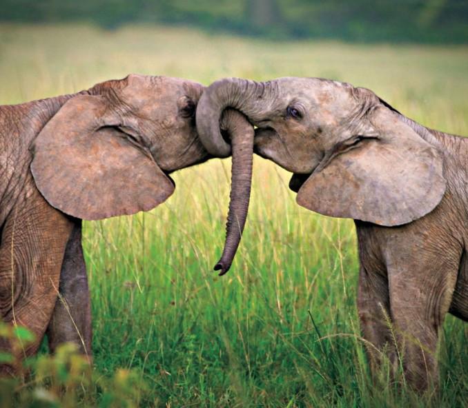 parejas-animales-enamorados-7