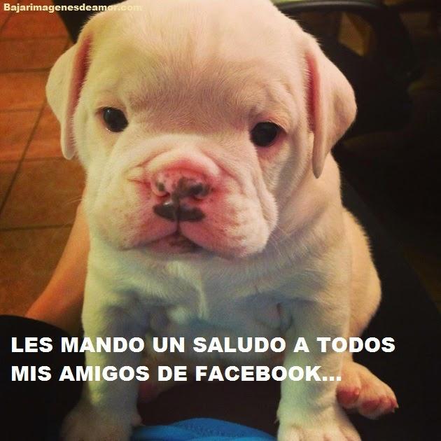 perrito-tierno-con-frase-para-facebook