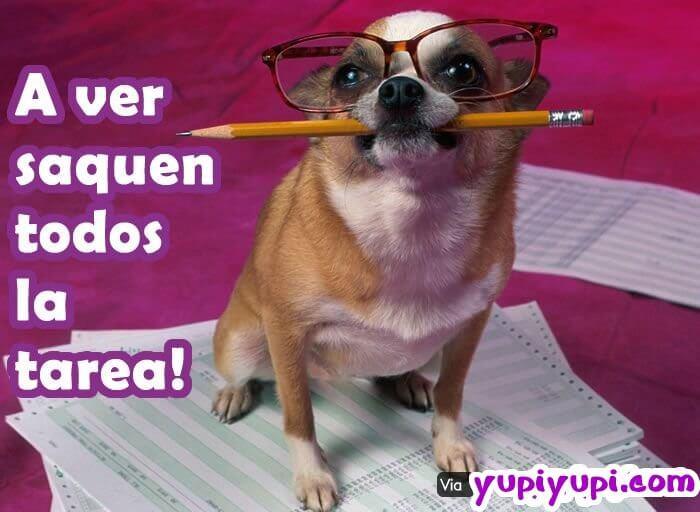 perro-maestro-con-lápiz