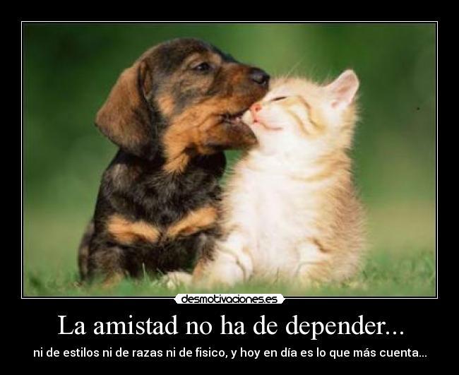 perro_gato1