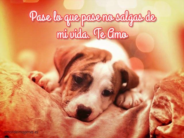 Imagenes-De-Perros-Con-Frases-De-Amor-Para-Dedicar