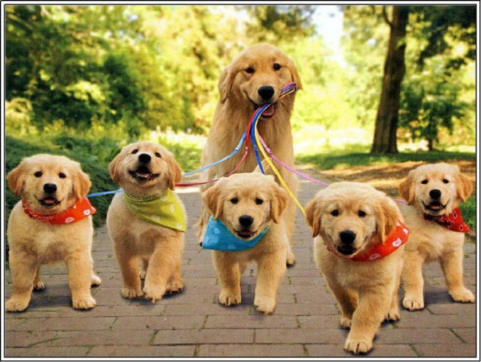 compras-para-golden-retriever