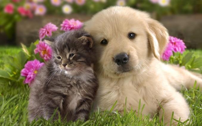 Hermosas imágenes en HD de fondos de pantallas de animalitos super ...