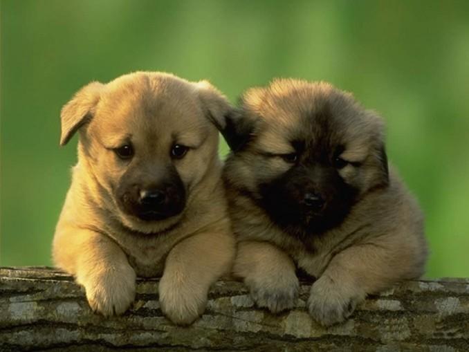 fotos-con-fondos-perros