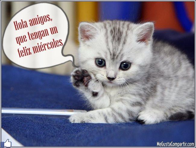 Los Gatos más Valientes del Mundo -
