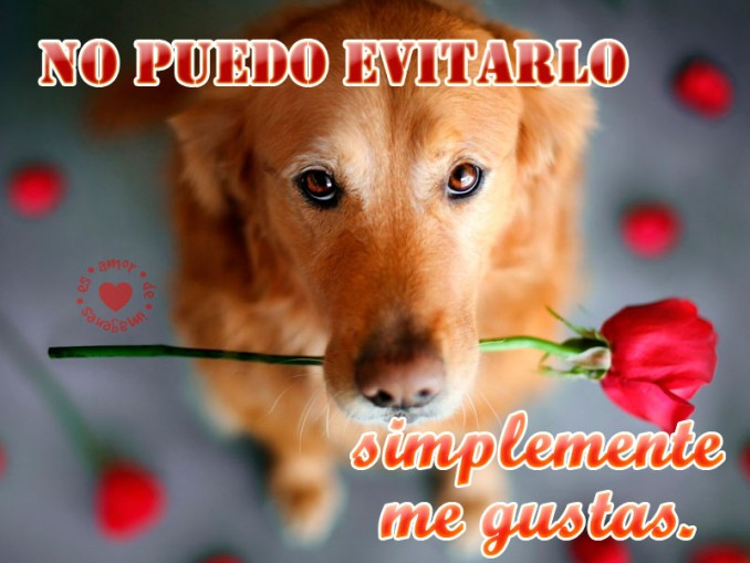 imagen-de-perrito-con-rosa-con-frase-perritos-graciosos-y-tiernos-con-frases-de-amor-para-dedicar