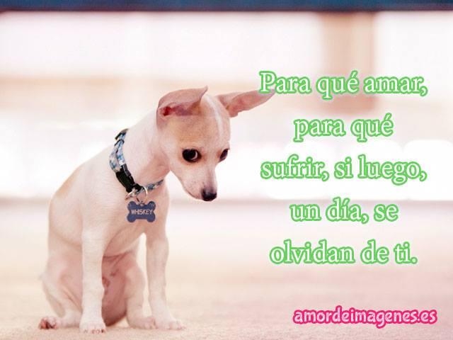 imagenes-con-frases-de-amor-con-perros-chihuahuas-cachorro-triste