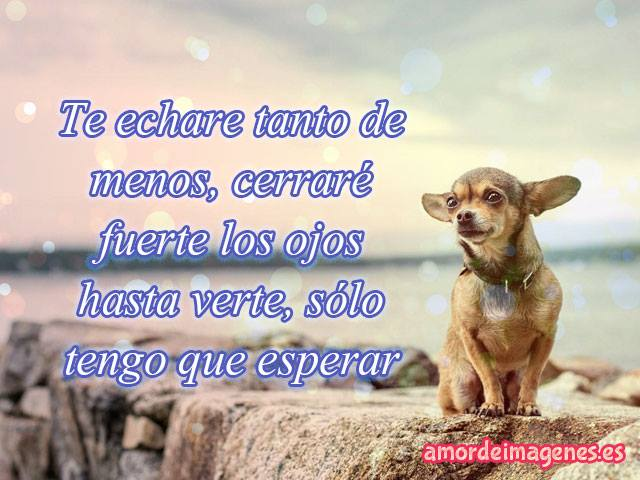 imagenes-con-frases-de-amor-con-perros-chihuahuas-te-extrano