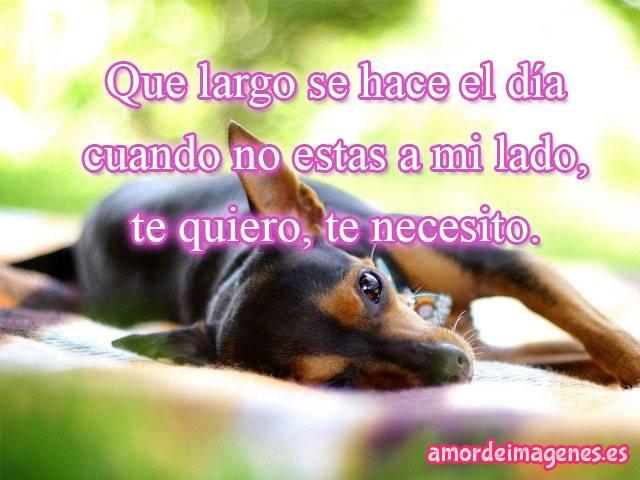 imagenes-con-frases-de-amor-con-perros-chihuahuas-te-necesito