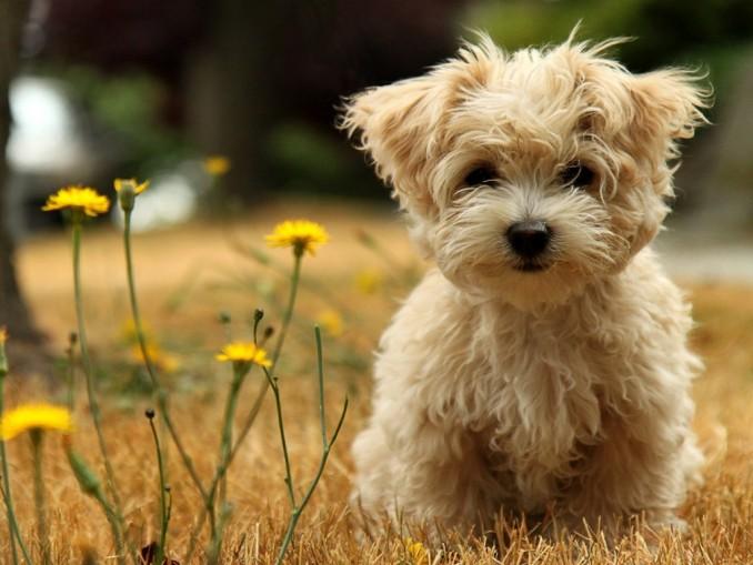 tiernas-animales-cachorro-hd-167628