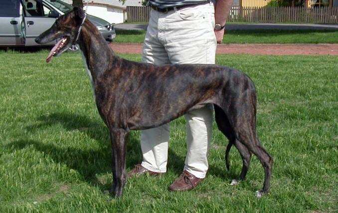 greyhound_nor1-tb