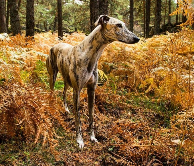my-greyhound-and-i-have-set-out-to-change-the-destiny-that-this-breed-suffers-in-spain-7__880-min