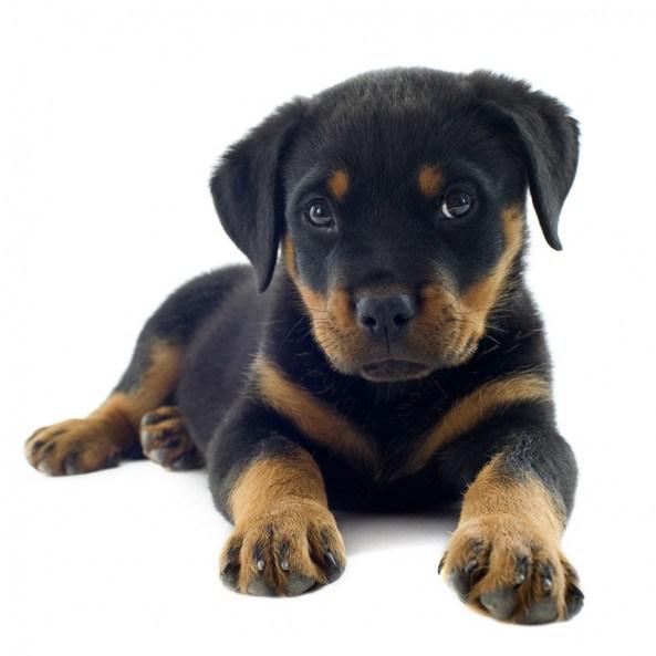 Perrita piel blanca se pone de perro para que la penetre - 4 10