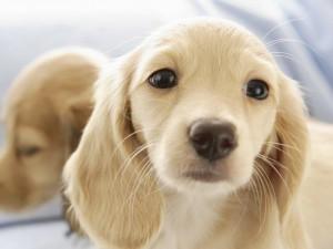 imascotasagenes-fondo-de-pantalla-escritorio-cachorros-animales-perros-gatos-varios-1