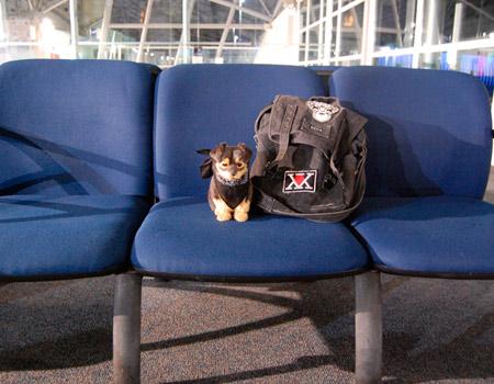 Resultado de imagen de aeropuerto gatos