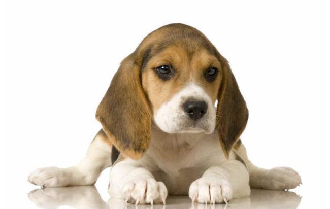 beagle$T2eC16d,!)MFIbtGFZUfBSUfSz,O-Q~~48_100