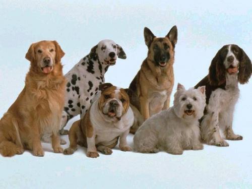 fotos_perros