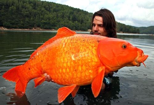Fotos de peces carpa y peculiaridades de su cr a im genes for Imagenes de estanques para ninos