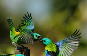 fotos-de-aves-19