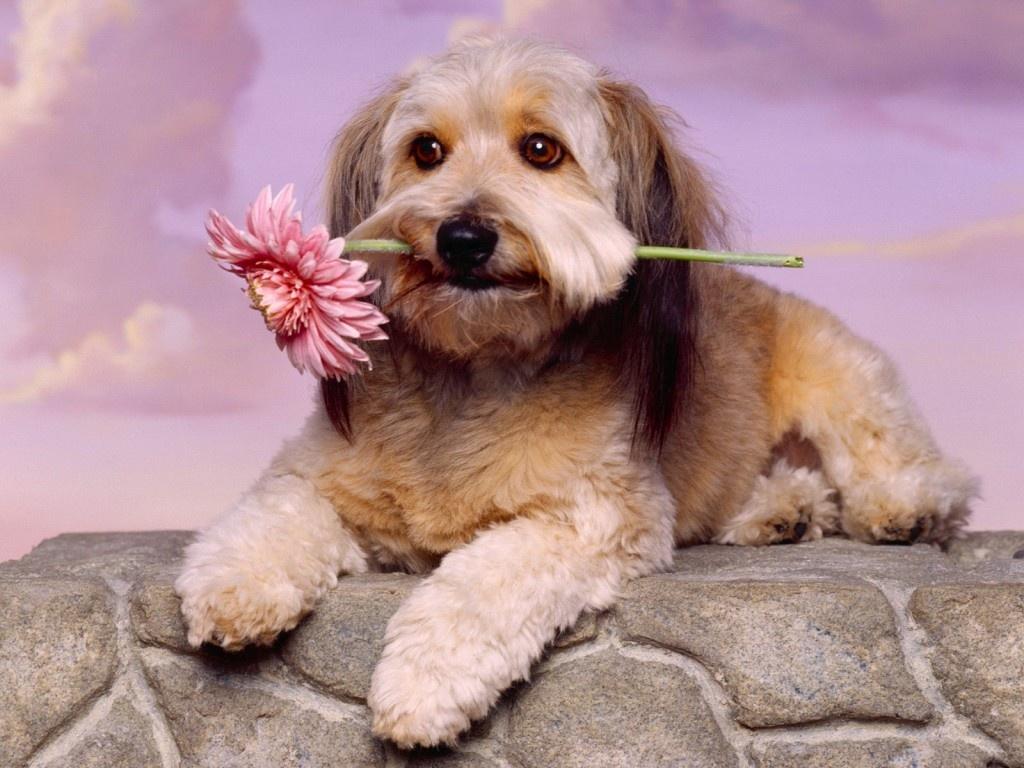 50 fondos de pantalla con mascotas para whatsapp del 29 de for Fondos de pantalla de perritos
