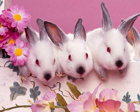 perrosondos-pantalla-animales-conejos-p