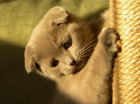 Gatito-usando-rascador