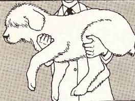come-fare-per-sollevare-un-cane-adulto_img