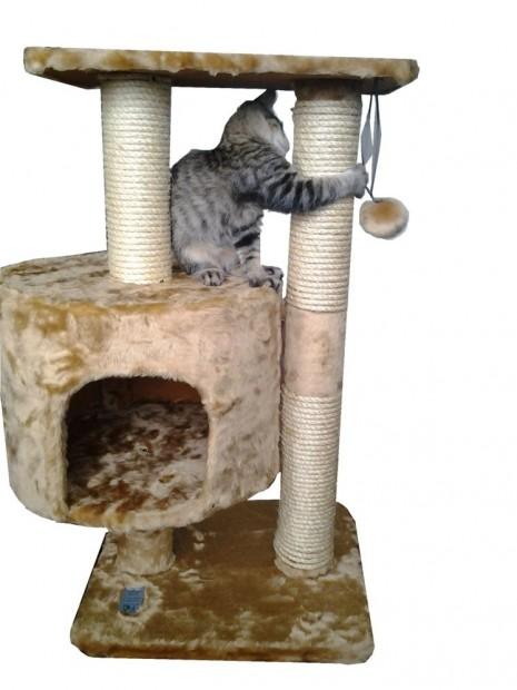 rascador-gatera-aranador-para-gato-gata-gatos_MLV-F-3025691792_082012