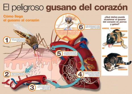 mascotasfilaria-infografia