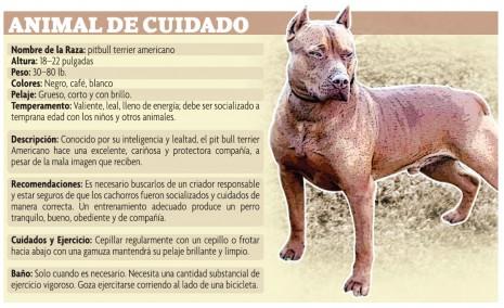 mascota1297263370_INFO ANIMAL