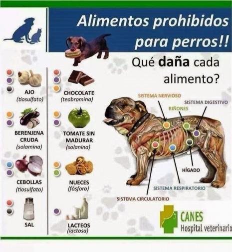 mascotasAlimentos Prohibidos para Perros