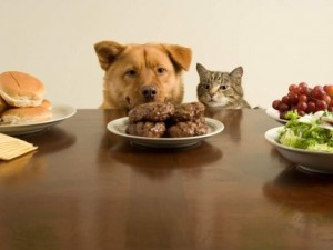 Dog and cat ready for the feast