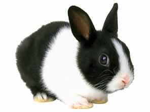 conejo[1]